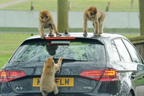 Pet Peeve: Your Animal Damaged  Hezek On The Safari