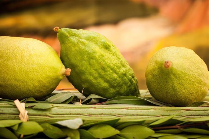Picking Fruit: A Guide To Esrog Selection